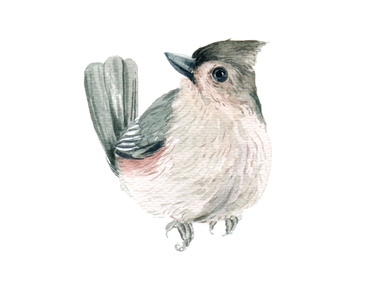 bird watercolor icon and element