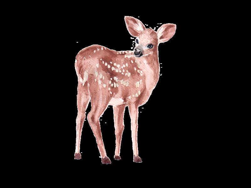 deer watercolor element