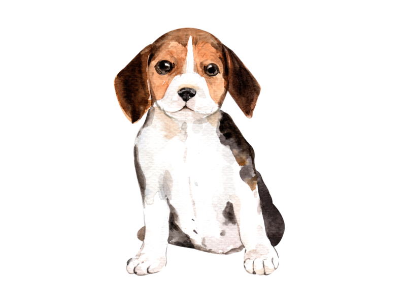 Cute Beagle watercolor