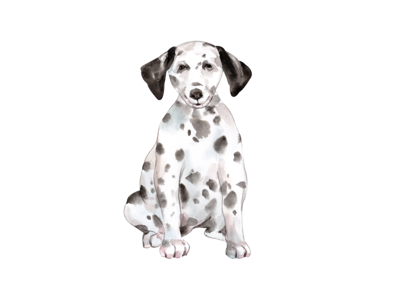 cute dog watercolor