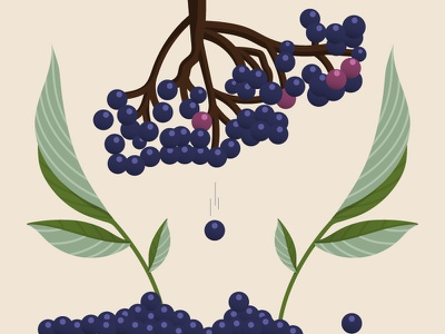 Elderberry-2 bottle label plant berry illustration syrup elderberry