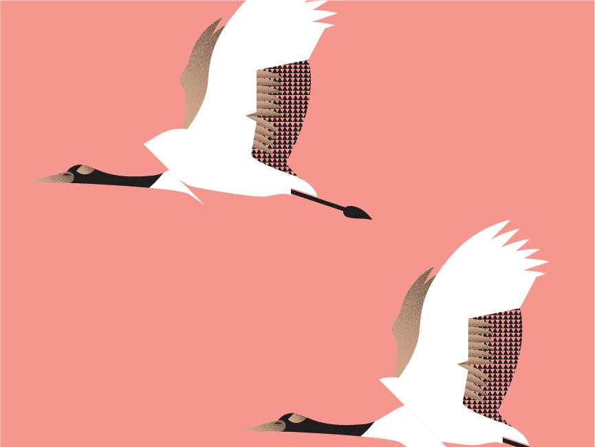 Avanti bird design vector illustration