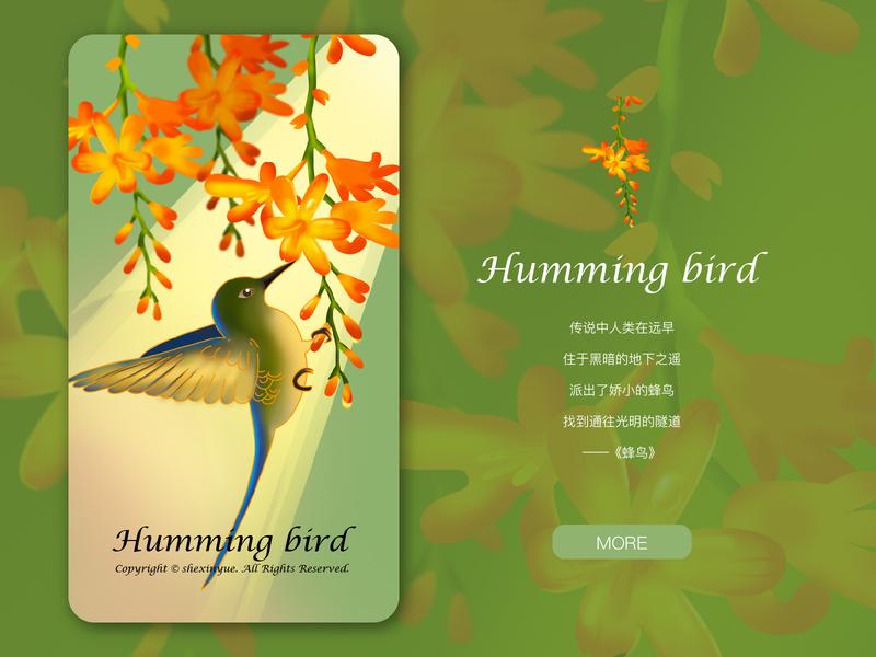 humming bird design 插图 illustration