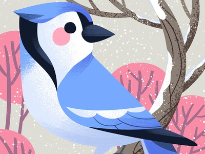 Hey Jay bluejay bird kidlitart cute art illustration