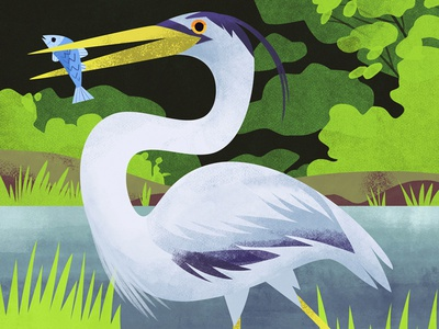 Heron green photoshop animals animal bird heron cute art artwork illustration
