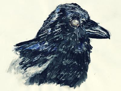Corvus corvus eye bill beak drawn hand couloured pencil head portrait bird edgar poe raven crow raw rough sketch drawing draw illustration illu