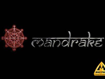 Mandrake Logo by Max Parr illustration logo design max parr web designer max parr ilustrator max parr designer max parr graphic designer max parr mandrake logo by max parr
