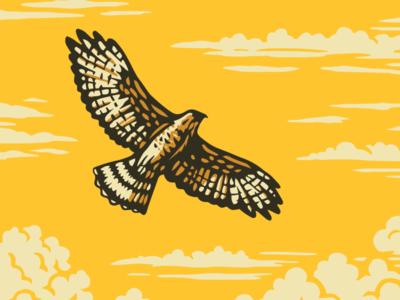 Explore Oklamerica: Hawk