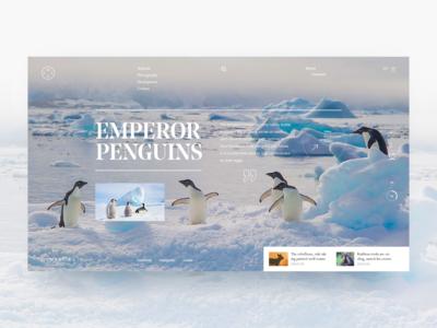Dynasties - Emperor Penguins