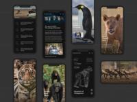 Dynasties - Mobile UI Design