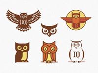 6 owls