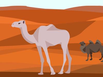 Сamels in the desert