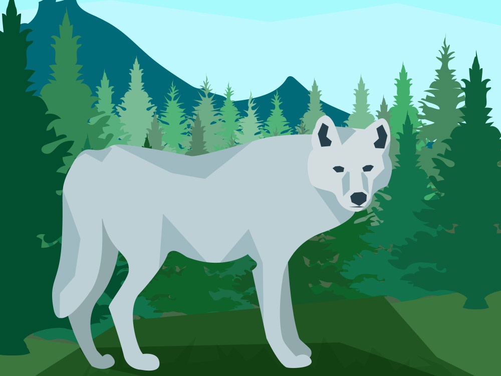 Wolf in the forest forest wolf minimal animal nature art vector illustrator flat illustration