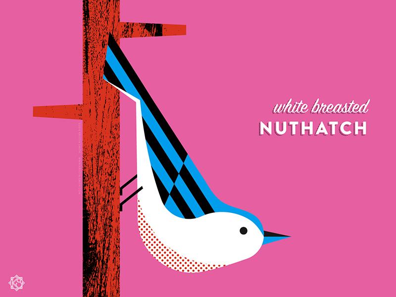 Nerdy birdies no. 3: White Breasted Nuthatch geometric illustration birds the nerdy birdies