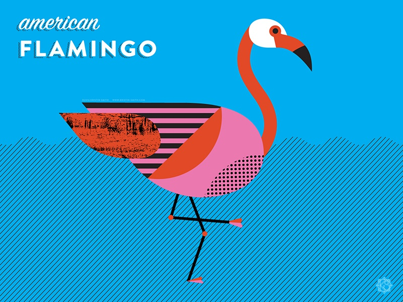 Nerdy Birdies no. 4: American Flamingo nerdy birdie birds flamingo