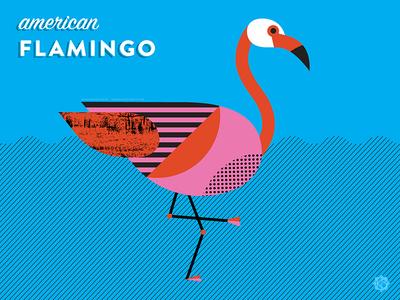 Nerdy Birdies no. 4: American Flamingo