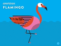 Nerdy Birdies no. 4: American Flamingo