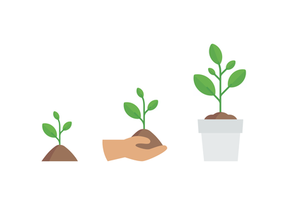 Steps of Growth Illustration flowers soil green seed plants growth illustration
