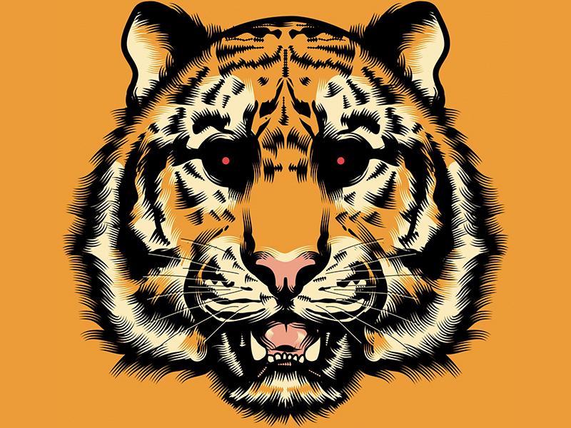 Hate animal tiger character cartoon adobe illustrator wacom tablet texture skull draw digital stay rotten illustration digital vector art illustrator graphic design vector design illustration