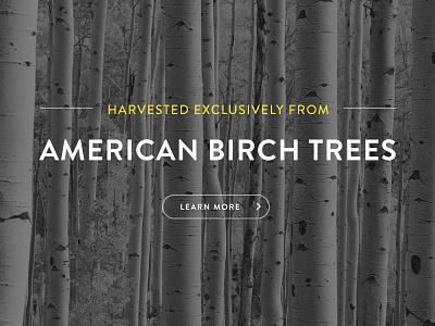 Sneak Pique brandon grotesque american trees texture typography black and white photography