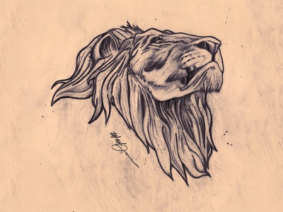 head up, shoulders back. illustration sketch drawn pencil portrait king animal wild cat lion handdrawn art