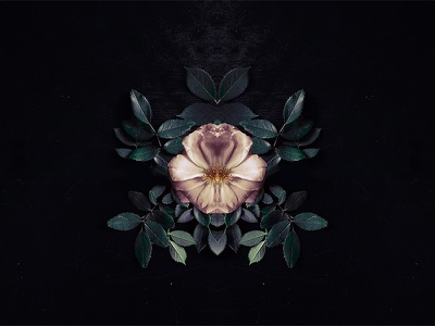 Growing into more, or retreating into less collage cover album symmetry flowers
