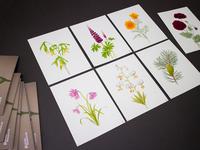Chelsea Flower Show 2013 - illustrations