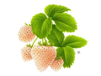 White Strawberry food fruit illustration seeds vintage botanical illustration fruit pencil plant design packaging botanical handmade drawing advertising naturalistic illustration