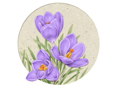 Crocus craft vintage pencil packaging advertising commercial botanical art botanical illustration botanical floral flower collage drawing naturalistic illustration