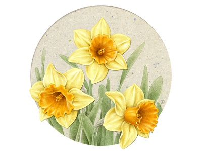 Daffodil digital art digital collage art art botanical illustration flora collage vintage pencil design botanical advertising drawing naturalistic illustration