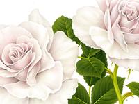 Rose x PRINTEMPS PARIS