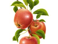 Apple x FRUTTAGEL