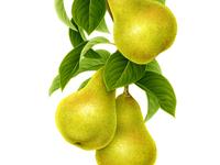 Pear x FRUTTAGEL