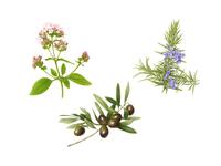oregan, olive and rosemary