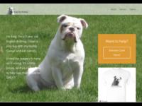 WordPress Website for Fundraiser