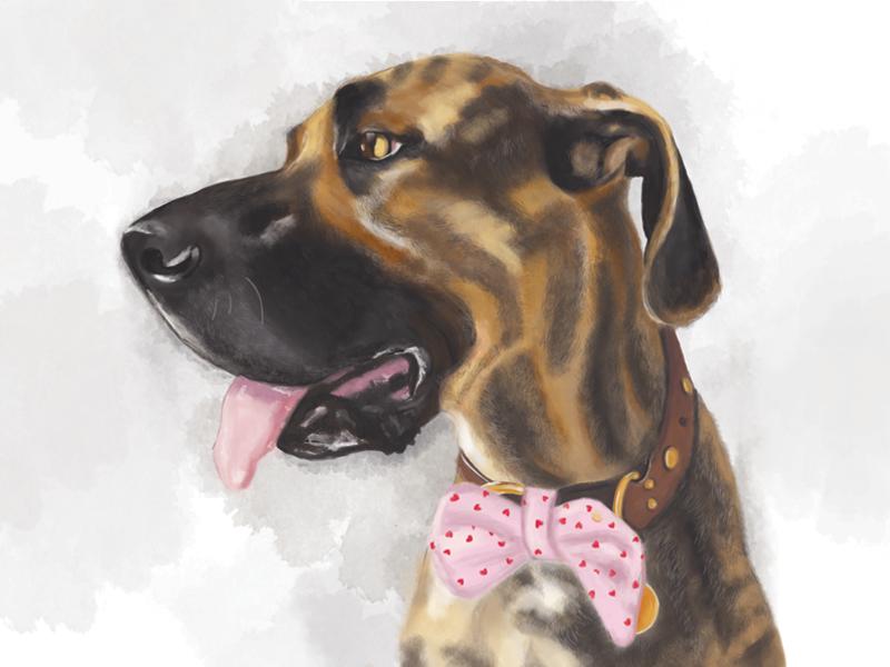 Augie painting digital dog portrait photoshop paint