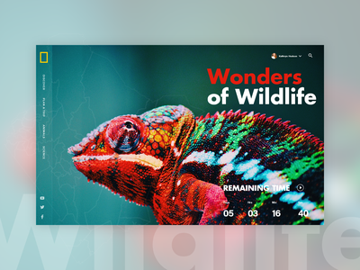 Wonders of Wildlife wild wild animal wildlife art wildlife photography wildlife illustration design creative banner web design uiux wildlife