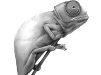 Img 0860