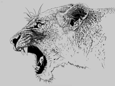 Lineart drawing lion