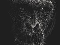 Line art Gorilla