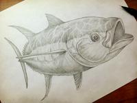 Tuna Sketch