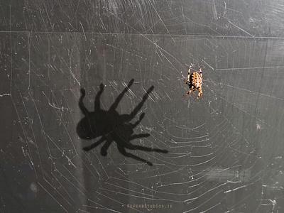 Spider Shadow photoshop shadow spider