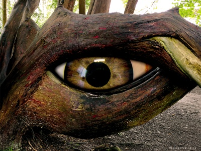 Eyeball Tree tree eyeball