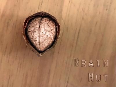 Brain Nut photoshop walnut nuts brain