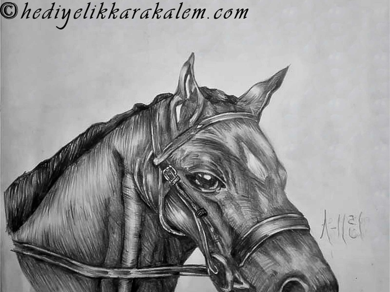 Black horse realism love life abstractart portrait creative graphic myart art pencildrawing sketching paintings graphics illustration pictures image draw drawings charcoaldrawing charcoal