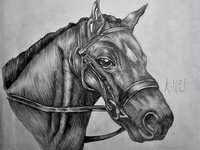 Black Horse Drawing | Sketching | Karakalem