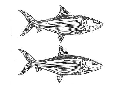Bonefish outdoors fishing fish carving woodblock linocut illustration