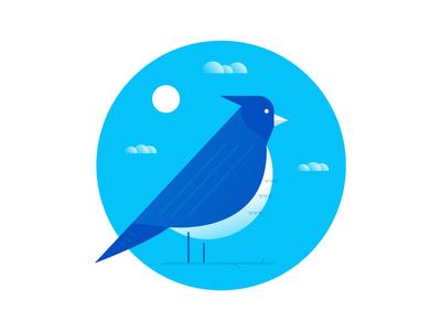 Bird  day bluejay perch sky sun icon bird
