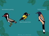 Birds of Roorkee