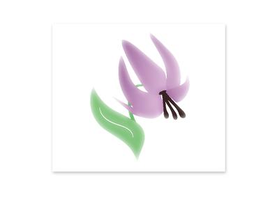 Dogtooth violet logo